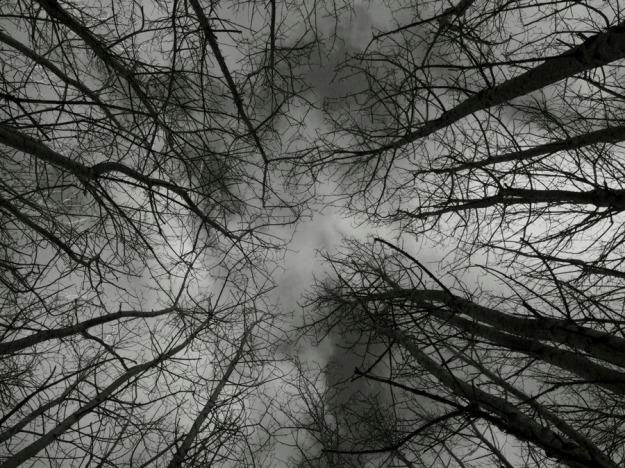 132248_1_0022(Blog)